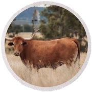 Longhorn Cow In The Paddock Round Beach Towel