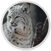 Lynx Looking Around At His Environment Round Beach Towel