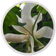 Magnolia Macrophylla Round Beach Towel