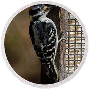 Male Hairy Woodpecker Round Beach Towel