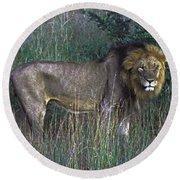 Male Lion Round Beach Towel