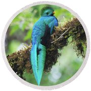 Male Quetzal Round Beach Towel