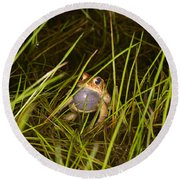 Male Toad Round Beach Towel