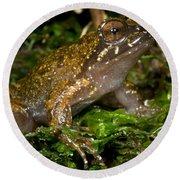 Mehu�n Green Frog Round Beach Towel