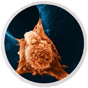 Metastasis Round Beach Towel by Science Source