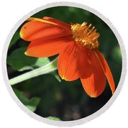 Mexican Sunflower Round Beach Towel