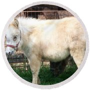 Miniature Horse Round Beach Towel