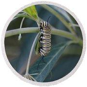 Monarch Catterpillar  Round Beach Towel