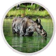 Moose In The Elk Creek Beaver Ponds Round Beach Towel