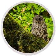Muir Woods Owl Round Beach Towel