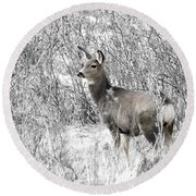 Mule Deer In Winter In The Pike National Forest Round Beach Towel