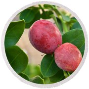 Natal Plums On Branch Round Beach Towel