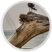 Gull On Driftwood Round Beach Towel
