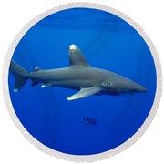 Oceanic Whitetip Shark Round Beach Towel