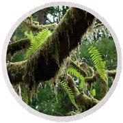 Office Art Forest Ferns Green Fern Giclee Prints Baslee Troutman Round Beach Towel