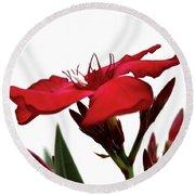 Oleander Blood-red Velvet 3 Round Beach Towel