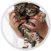 One Week Old Kittens Round Beach Towel