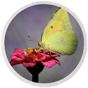 Orange Sulphur Butterfly Portrait Round Beach Towel