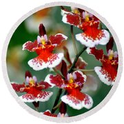 Orchid 34 Round Beach Towel