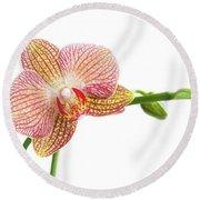 Orchid, Phalaenopsis, Flower Round Beach Towel