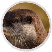 Oriental-small-clawed-otter Round Beach Towel