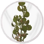 Pacific Mistletoe Round Beach Towel