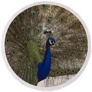 Peacock Close-up Round Beach Towel