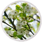 Pear Tree Blossoms Round Beach Towel