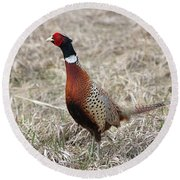Pheasant Rooster Round Beach Towel