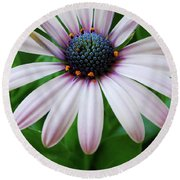 Pink African Daisy Round Beach Towel