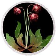 Pitcher Plant Flowers, X-ray Round Beach Towel