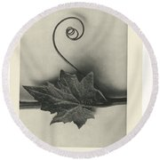 Plant Studies, 1928, Nature Series, By Karl Blossfeldt  Round Beach Towel