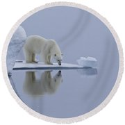 Polar Bear In Svalbard Round Beach Towel