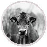 Portrait Of A Dairy Cow In The Rain Stowe Vermont Round Beach Towel