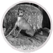 Portrait Of An Italian Greyhound In Black And White Round Beach Towel