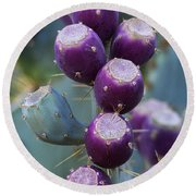 Prickly Pear Fruit  Round Beach Towel