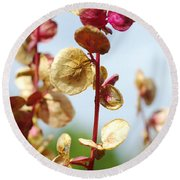 Purple Goosefoot Chenopodium Round Beach Towel