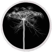 Queen Annes Lace, X-ray Round Beach Towel