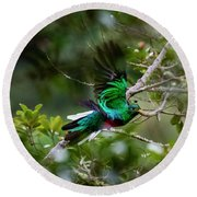 Quetzal In Costa Rica Round Beach Towel