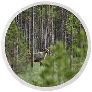 Rare And Wild. Finnish Forest Reindeer Round Beach Towel