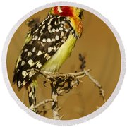 Red And Yellow Barbet Round Beach Towel