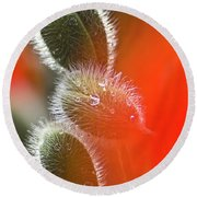Red Corn Poppy Bud And Red Dots Round Beach Towel