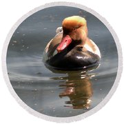 Red-crested Pochard Round Beach Towel