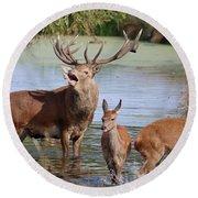 Red Deer In Bushy Park London Round Beach Towel