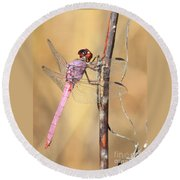 Red Dragonfly Portrait Round Beach Towel