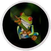 Red-eyed Green Tree Frog Hanging On Round Beach Towel