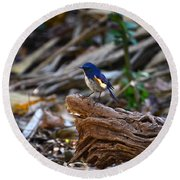Red-flanked Bluetail 2 Round Beach Towel
