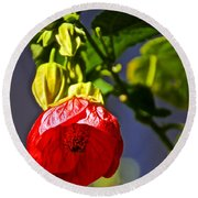 Scarlet Mallow At Pilgrim Place In Claremont-california- Round Beach Towel