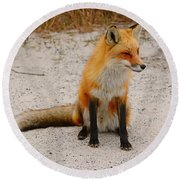 Red Fox 3 Round Beach Towel
