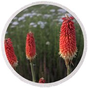 Red Hot Pokers Round Beach Towel
